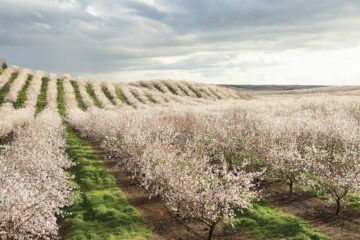 With talks to renegotiate free-trade agreements underway, many American growers and ranchers what the impacts will be.