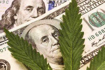 Photo Illustration of Marijuana Leaves and $100 bills