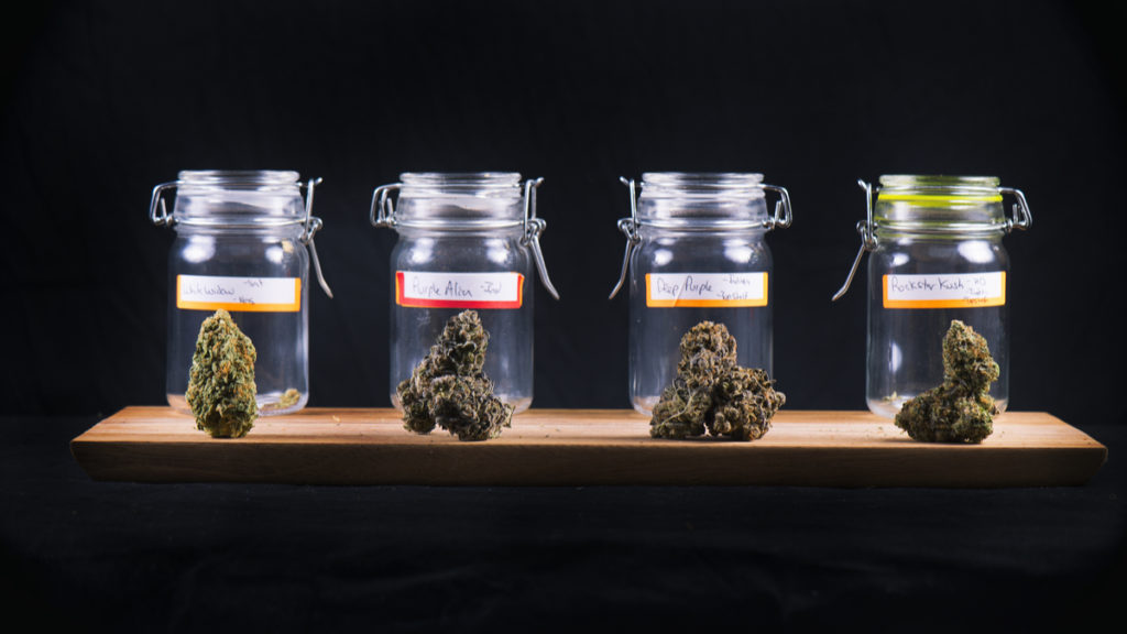 Assorted cannabis bud strains and glass jars isolated on black background