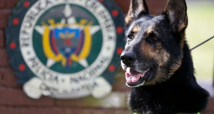 Photo of Colombian drug dog, Sombra