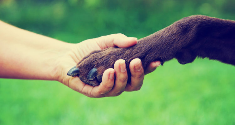 Photo of human hand touching a dog's paw