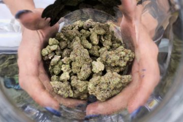 Photo of a bud tender displaying a jar of cannabis