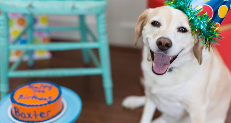 Photo of a smiling dog at his birthday party