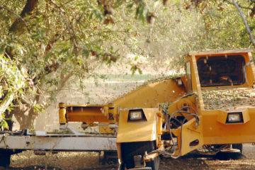 photo of California almond harvest