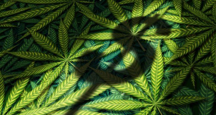 Photo illustration of marijuana leaves and dollar sign