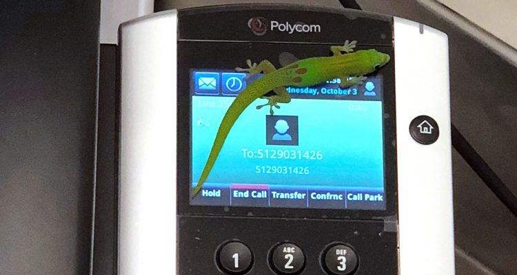 Photo of a gecko on a phone at the center in Kailua Kona, Hawaii