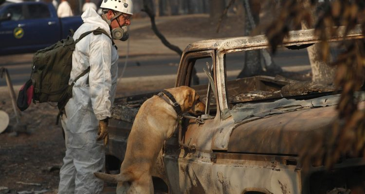 Photo of dog searching for human remains after the Camp Fire.