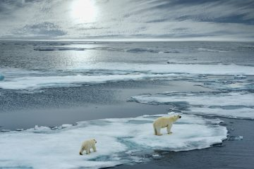 Photo of polar bears on melting ice