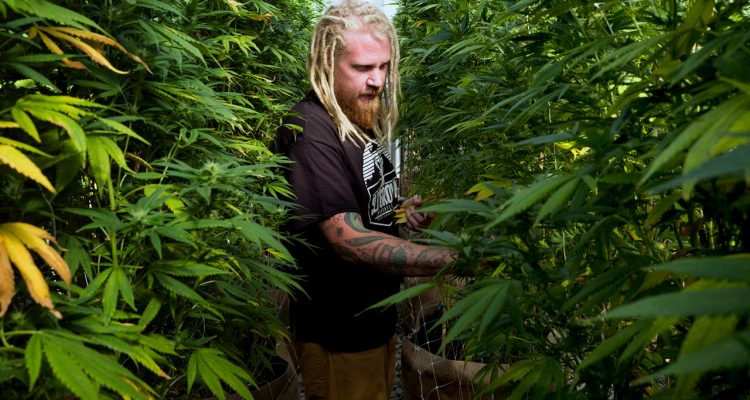 Photo of Steve Fagan, grower and owner of SLOgrown Genetics