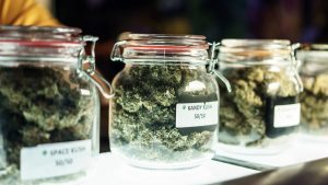 marijuana buds displayed in glass jars