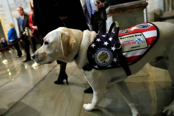 Photo of Sully the Service Dog