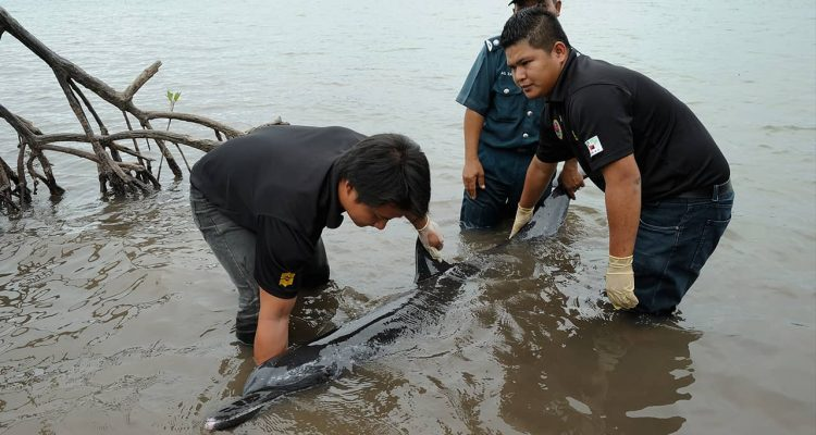 Photo of men trying to rescue a stranded dolphin