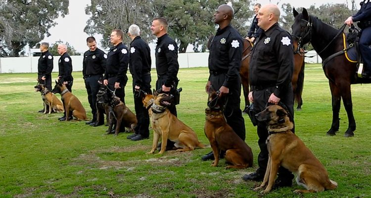 Fresno police department K9 teams at swearing in ceremony.
