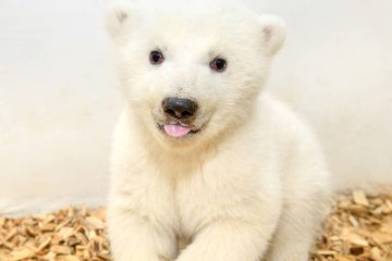 Photo of baby polar bear at Berlin Zoo