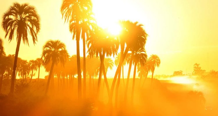 Photo of palm trees and sunshine in the summer