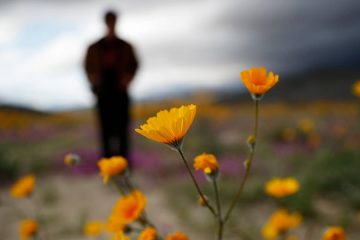 Photo of man looking on amid wildflowers