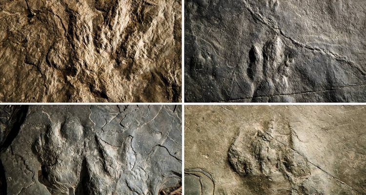 Photo of dinosaur footprints found in Valley Forge