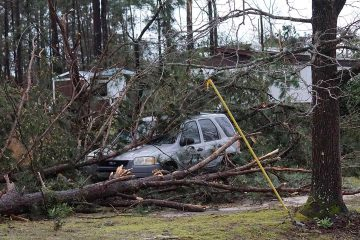 Photo of downed treed along Lee Road 11 in Alabama