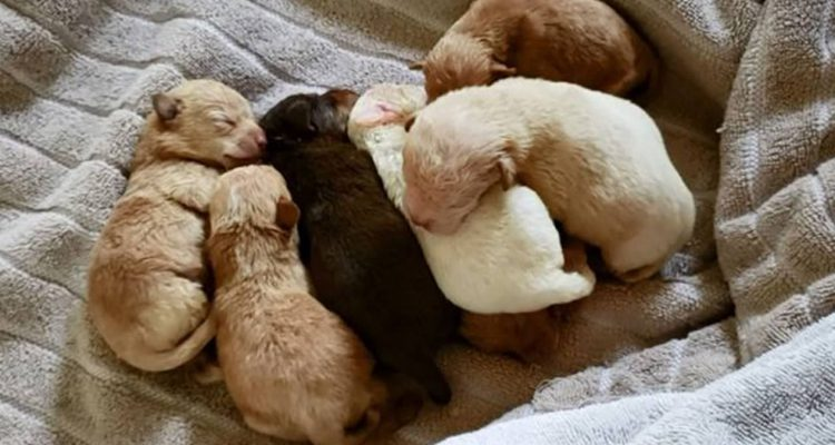 Photo of puppies recovered from a dumpster