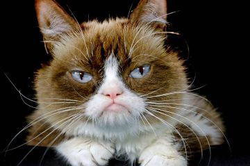 Photo of Grumpy Cat