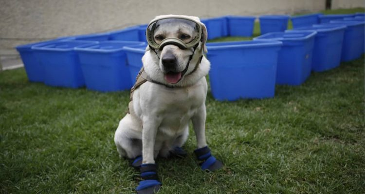Photo of Frida the rescue dog