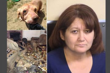 Kingsburg animal cruelty