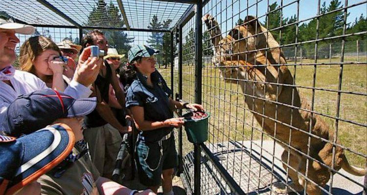 Photo of The Lehe Ledu Wildlife Zoo in China