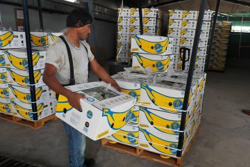 Photo of a worker stacking boxes of bananas