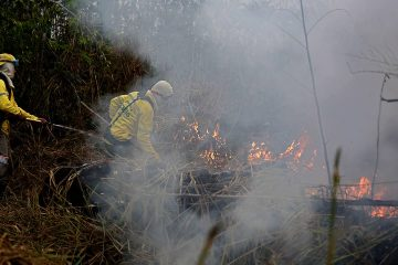 Photo of firefighters working to put out fires in the Jacunda National Forest