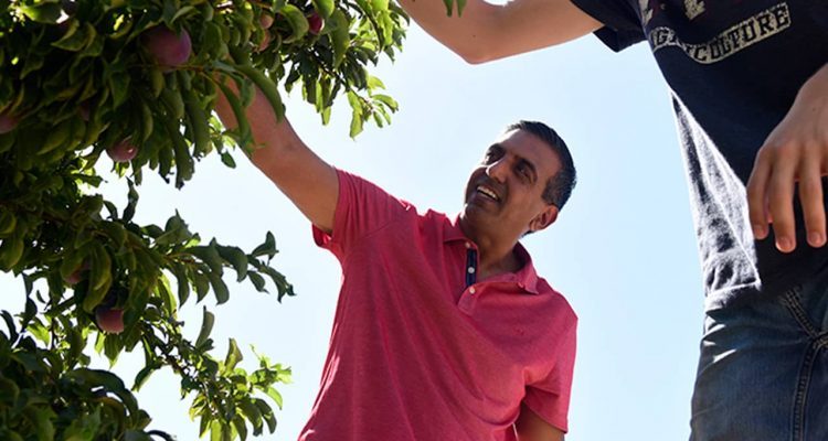 Photo of Bill Purewal in an orchard