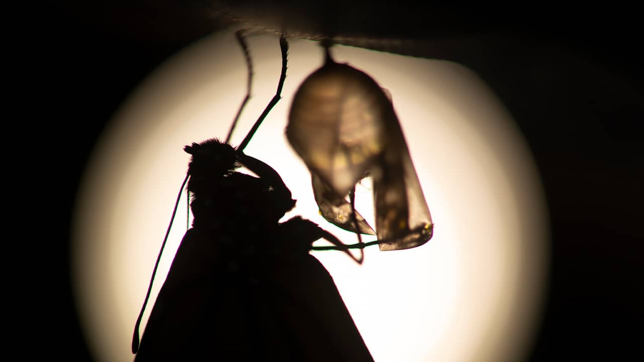 Photo of monarch butterfly silhouette