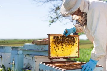 Photo of a beekeeper