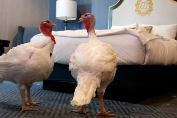 Photo of turkeys Bread and Butter at the Willard InterContinental Hotel
