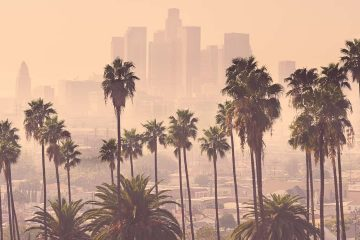 Photo of Los Angeles skyline and palm trees
