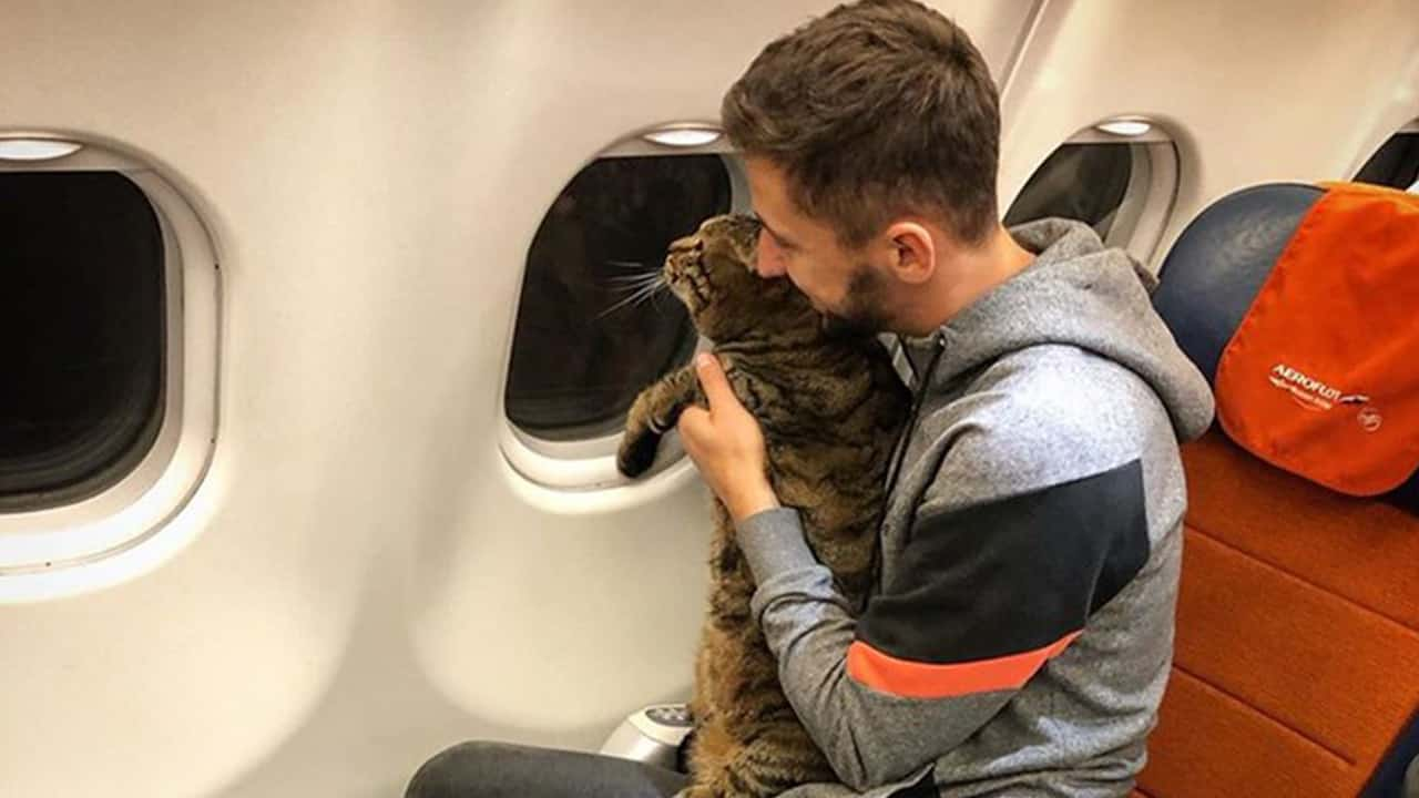 Photo of Mikhail Galin with Viktor the cat on a plane