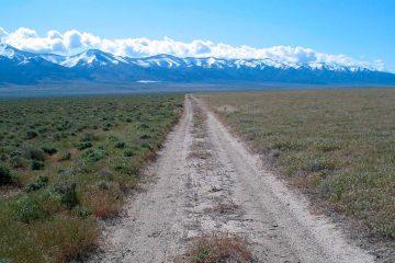 Photo of invasive grass