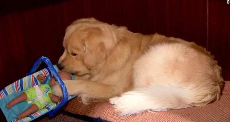 Photo of a dog with a toy baby doll