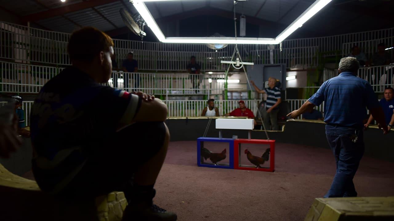 Photo of fight night at the Campanillas cockfighting club, in Toa Baja, Puerto Rico