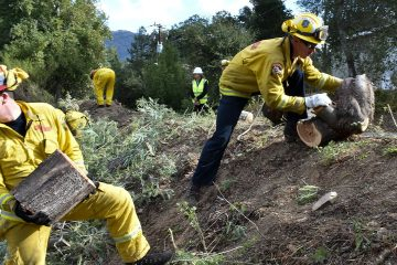 Photo of a fire prevention crew hauling away sections of tree they cut down