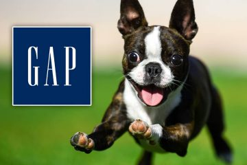 Photo of a bounding Boston terrier in a field of grass accompanied by The Gap logo