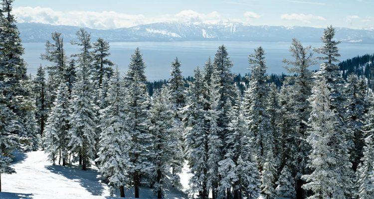 Photo of snowy trees in Lake Tahoe