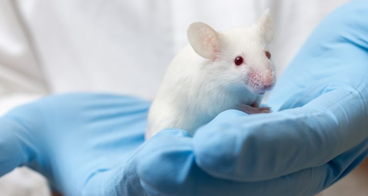 Photo of a gloved scientist holding a white mouse