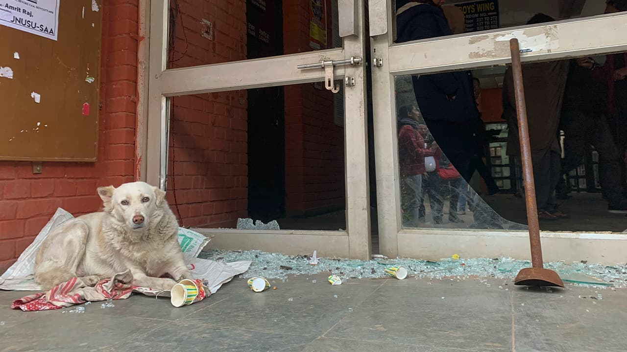 Photo of a dog resting next to shattered glass of a student hostel building