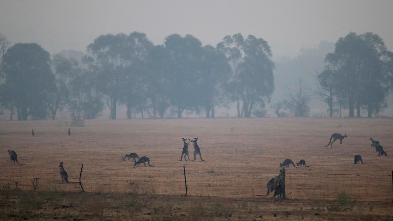 Photo of kangaroos surrounded by wildfire smoke