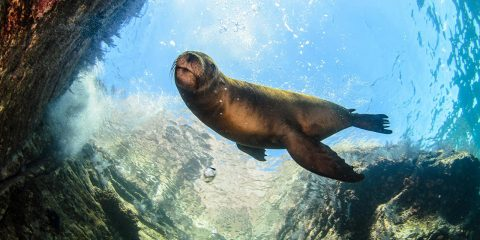 Photo of a sea lion underwater