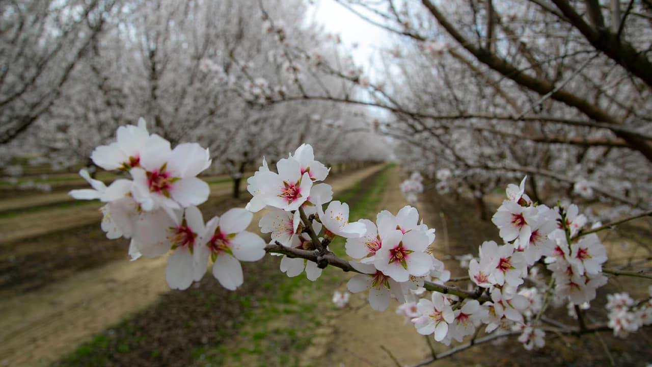 blossoms-4