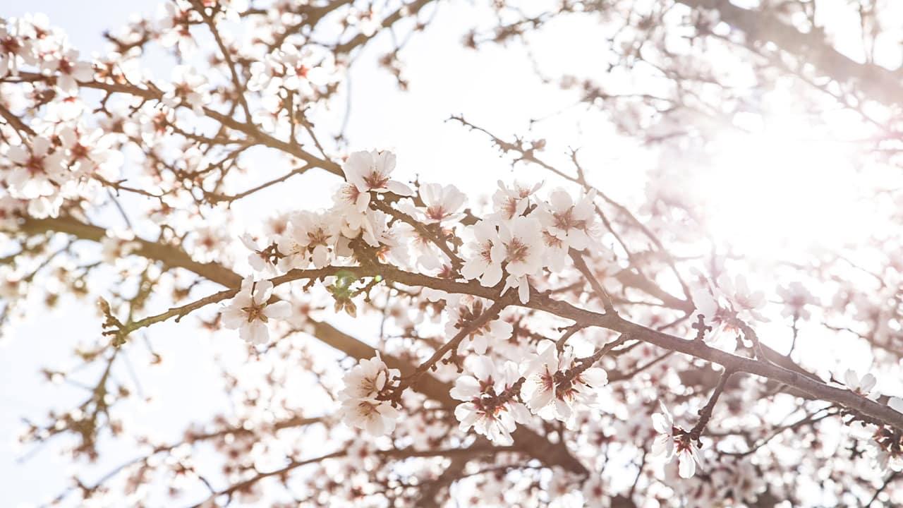 blossoms-3