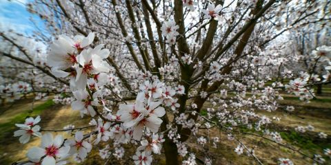 Photo of blossom trees