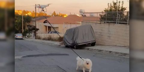 Photo of a dog being walked by a drone