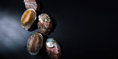 Photo of frozen abalone